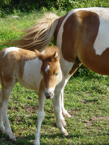 Mosquito Squad protects horses from mosquitoes and ticks