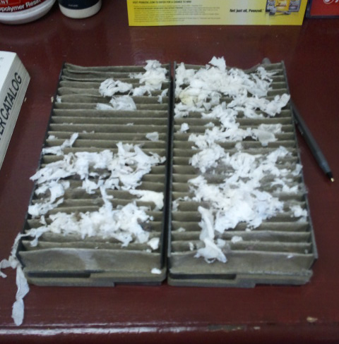 Mice nesting in auto air filter
