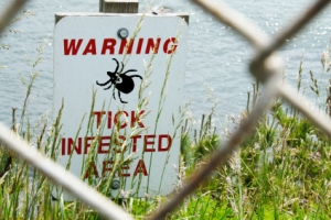 Ticks Populations increase
